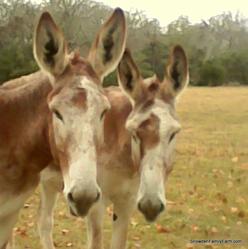 Nollie-and-Nettie-2014-12-06